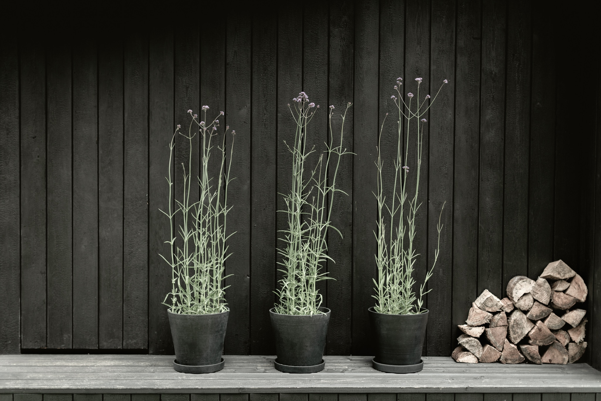 Plants in front of charred cladding on cabin