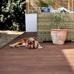 Dog laying on Kebony decking