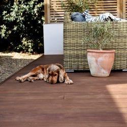 Dog laying on Kebony decking